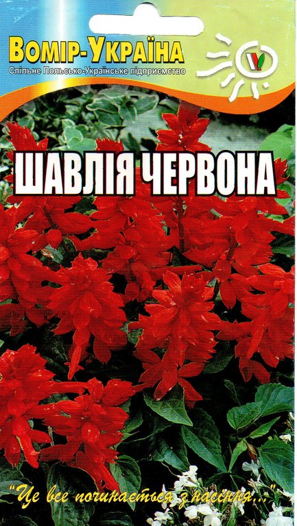 Шавлія червона