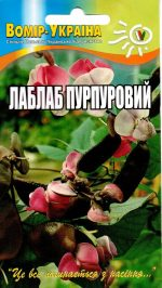 Лаблаб пурпуровий