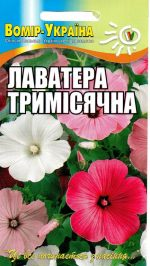 Лаватера тримісячна