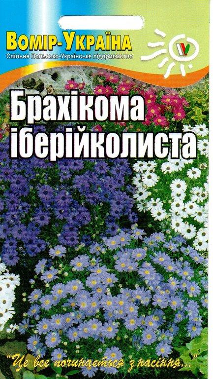 Брахікома іберійколиста